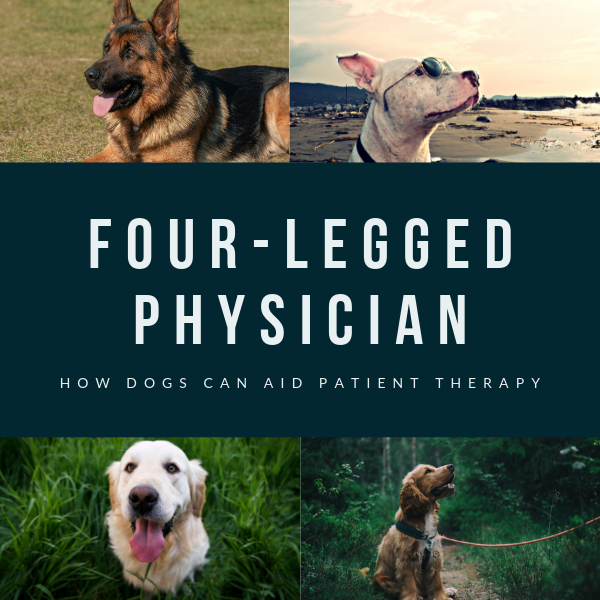 Four-Legged Physicians: How Dogs Can Aid Patient Therapy